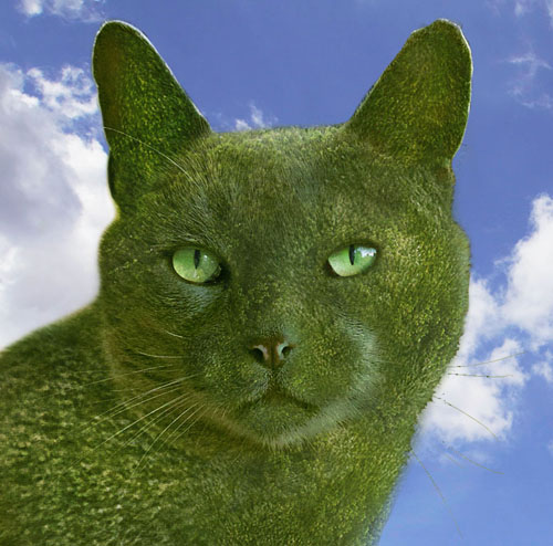 The Topiary Cat Profile pic